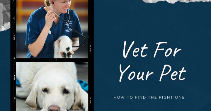 What Are The Steps To Take When Choosing A Good Vet?