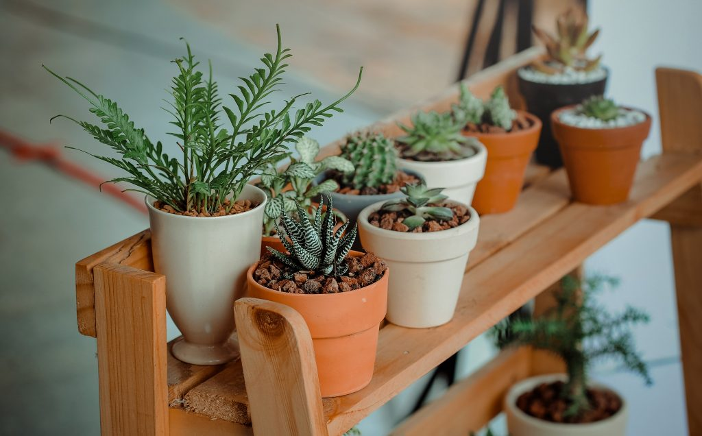 Get These Indoor Plants To Make Your Home Look Better